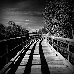 Robinson Preserve by Jeremy Barton - Landscapes Prairies, Meadows & Fields ( clouds, sky, mangroves, florida, bradenton, bridge )