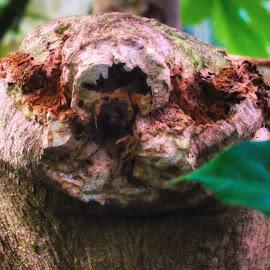 Looking Back by Dave Walters - Digital Art Things ( face, nature, tree, colors, digital art )
