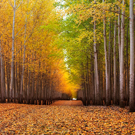 Road between the seasons by Dylan MacMaster - Landscapes Forests