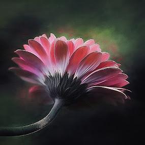 Pretty in Pink by CLINT HUDSON - Flowers Single Flower