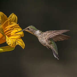 Big Drinking Cup by Roy Walter - Animals Birds ( wild, ruby throated hummingbird, nature, wildlife, birds, hummer, animal )