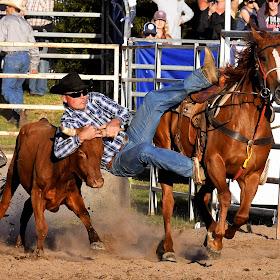 rodeo 01.jpg