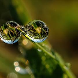duo dews by Kawan Santoso - Nature Up Close Natural Waterdrops