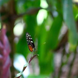 by Kim Rogge - Animals Amphibians