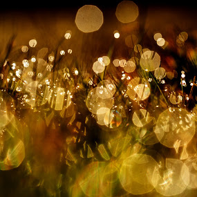 Morning Sparkle by Russell Mander - Digital Art Abstract ( sparkle, sunrise, grass, dew, early morning )