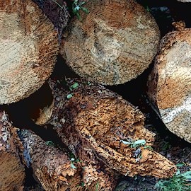 cut logs by Edward Gold - Digital Art Things ( shades brown, stacked, green, brown, logs, digital art,  )