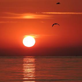 by Helen Beatrice - Landscapes Sunsets & Sunrises (  )