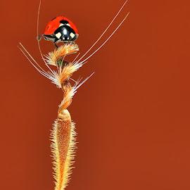 by Mustafa Öztürk - Animals Insects & Spiders