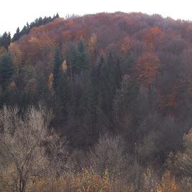 Есен by Georgi Kolev - Novices Only Landscapes ( гора., цветове., есен., планина., време. )