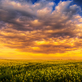 The Luminous Landscape XII. by Zsolt Zsigmond - Landscapes Prairies, Meadows & Fields ( clouds, rapeseed, sky, canola, yellow, flowers, landscape )