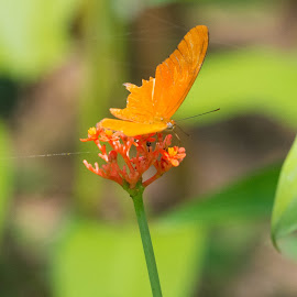 Orange is the colour! by Annette Reddy-Keating - Animals Other ( butterfly )