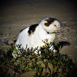 Mudge in the wind by Sarah Harding - Animals - Cats Playing ( cat, windy, pet, weather, animal,  )