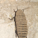 Monster Disguised Cockroach
