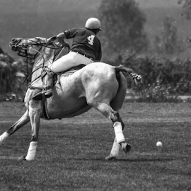 Polo by Nancy Merolle - Sports & Fitness Other Sports ( other sports, ball, b&w, horse, sports, polo, athlete,  )