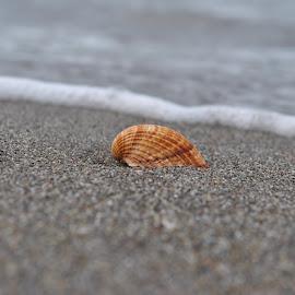 lonely shell by Tatjana Lelic - Animals Sea Creatures (  )