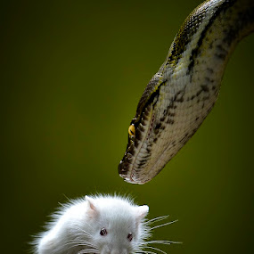Beauty And The Beast by Pimpin Nagawan - Animals Reptiles
