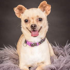 by Myra Brizendine Wilson - Animals - Dogs Portraits ( canine, foster brielle, foster dog, dogs, pet, pets, foster, gcspca, foster dog brielle, dog, brielle, greater charlotte spca )
