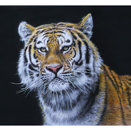 Tigre I by Kile Zabala - Drawing All Drawing