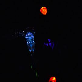 Solar Lawn Lights  by Arthur Brokop II - Abstract Light Painting ( lights, night light, blue light, blue, dark glow )