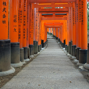 Fushimi Inari Shrine by Paul Atkinson - Landscapes Travel ( religion, orange, structure, shrine, torii, inari, japan, kyoto, shinto, fushimi, design, gate )