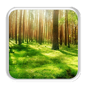 Sunny Forest 2D Live wallpaper APK for iPhone