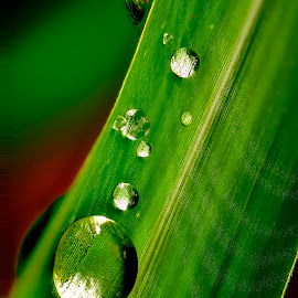 by Francois Wolfaardt - Nature Up Close Natural Waterdrops