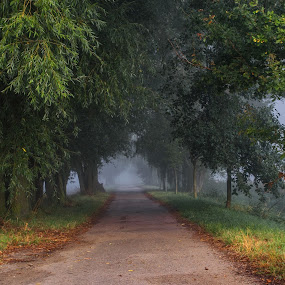 Misty morning 3 by Jiří Valíček - Uncategorized All Uncategorized ( morning, sun, misty,  )