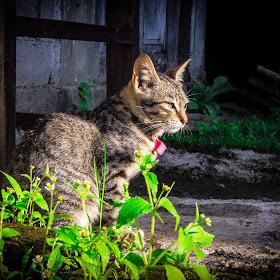 kucing (1 of 1).jpg