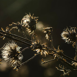Survived the winter by Kevin Adams - Nature Up Close Other plants