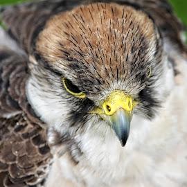 RF 28 by Michael Moore - Animals Birds