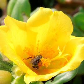 by Prakriti Brahmachari - Nature Up Close Gardens & Produce