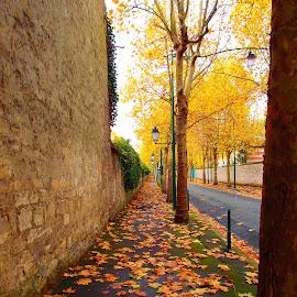 Along the autumn alley  by Svetlana Saenkova - City,  Street & Park  City Parks ( autumn colours, season, autumn leaves, autumn )