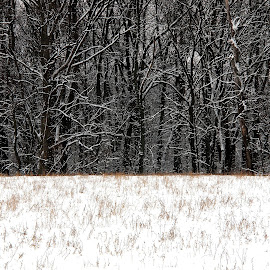 by John  Pemberton - Abstract Patterns ( texture, textures, snow, minimalism, trees )