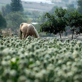 Horse en the field by Cristobal Garciaferro Rubio - Animals Horses ( field, flowers field, horse )