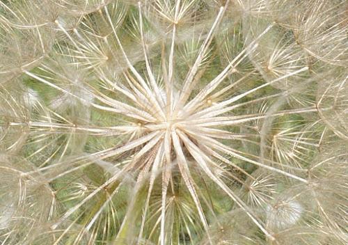 by Matt Bernier - Novices Only Flowers & Plants