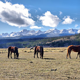 Sawtooth Ponies by Dave Bower - Animals Horses