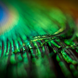 Gentle Touch by Nagual Mancer - Abstract Macro ( feather, peacock, touch, abstract, gentle )