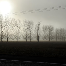 Misty morning Glen Innes Australia by Di Mc - Novices Only Landscapes ( glen innes, autumn, fog, australia, landscape, poplars, mist )