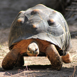The Turtle by Susie Smith - Animals Reptiles ( zoo turtle, turtle )