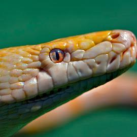 #$$ by Yadi Setiadi - Animals Reptiles