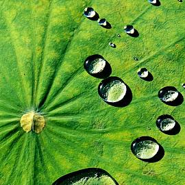 ***** by Steven De Siow - Nature Up Close Natural Waterdrops ( abstract, water, water drops, waterdrops, water droplets )