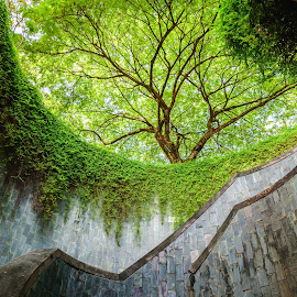 Spiral staircase at Fort Canning Park, Singapore. by Nuttawut Uttamaharach - City,  Street & Park  City Parks ( nobody, crossing, canning, bright, street, rock, leaf, circle, yellow, landscape, singapore, nature, tree, fresh, rise, asia, grey, peaceful, park, grass, texture, green, beautiful, fort, scenic, environment, season, background, outdoor, staircase, scene, underground, big, natural, garden, walk, wall, outside, floral, giant, tunnel )