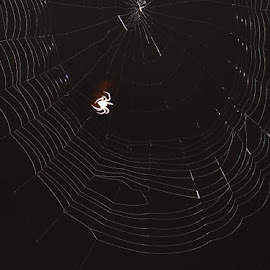 Charlotte's Web by Terry Linton - Nature Up Close Webs