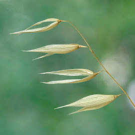 by Boris Buric - Nature Up Close Other plants