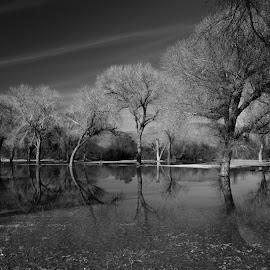 by Steven Aicinena - Black & White Landscapes ( winter, wildlife, big bend national park, landscape )