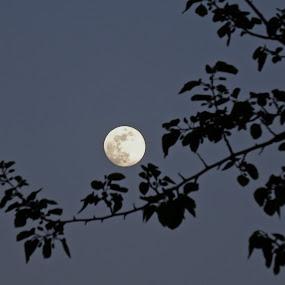 moon by Dobrinka Ivanova - Uncategorized All Uncategorized