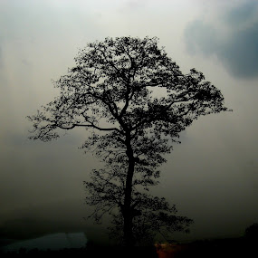 Tree by Raj Mushahary - Nature Up Close Trees & Bushes