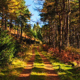 color way by Zilvinas Zilvis - Landscapes Forests