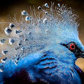 Nice Hairstyle by Ken Nicol - Animals Birds (  )