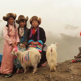 Tibetan girls by Francisco Cardoso - People Street & Candids ( girls, children, sheep, travel, tibet )